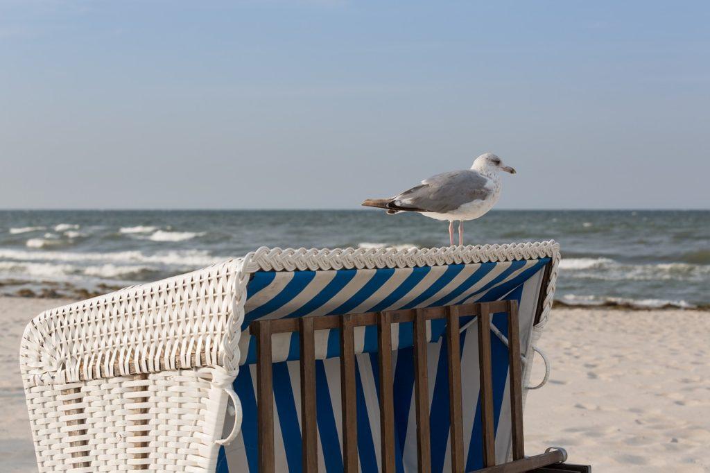 Oberer Teil eines Strandkorbes. Darauf sitzt eine Möwe. Im Hintergrund Strand und Meer